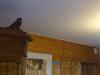 plafond-tendu-google-2
